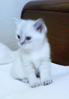 仔猫のキキchan